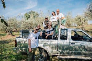 olijven oogsten in toscane